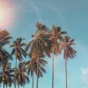 coconut-dawn-daylight-1152359