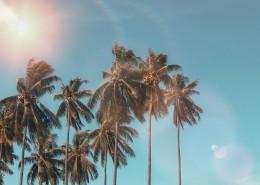 coconut-dawn-daylight-1152359
