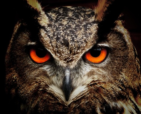 owl-bird-eyes-eagle-owl-86596